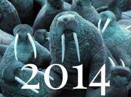 Blue Walrus picks for 2014